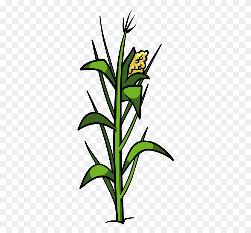 430x720 Corn Png Images Transparent Free Download - Plant PNG