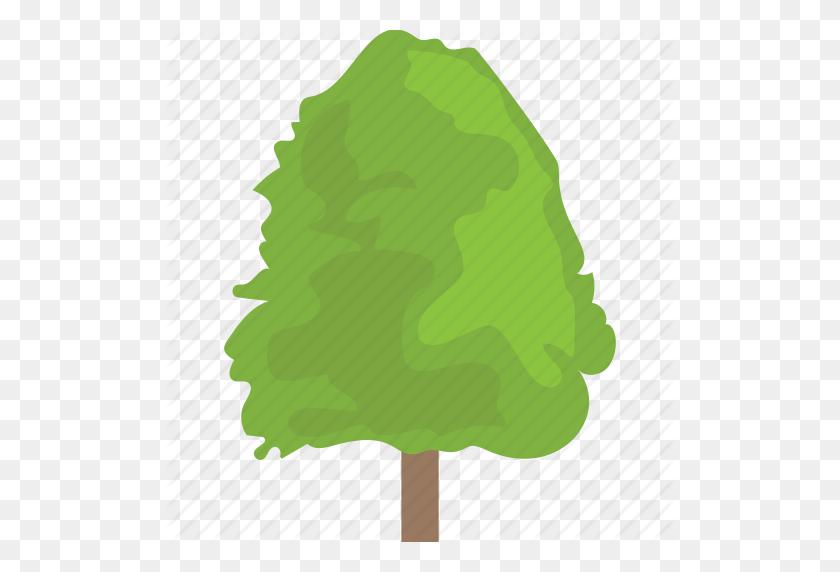 Cottonwood, Fast Growing Tree, Hedge Trees, Hybrid Trees, Poplar - Hedge PNG
