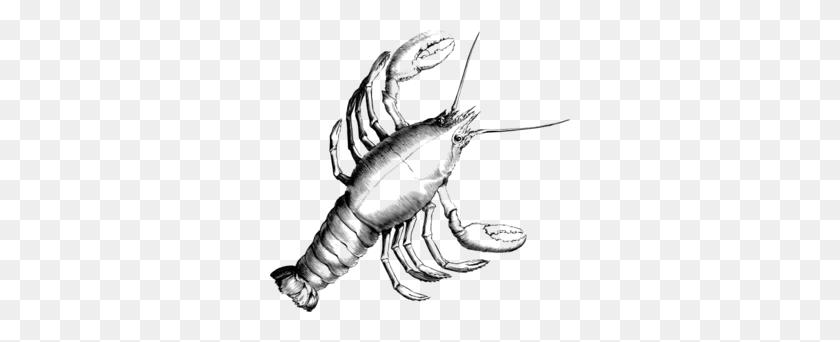 Crawfish Clip Art - Crawfish Clip Art