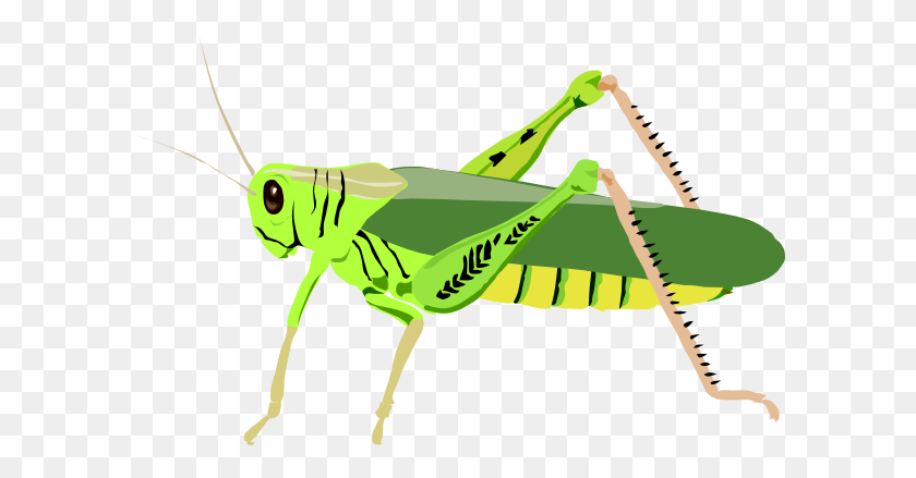 Cricket Insect Clip Art Clipart Collection - Cute Bug Clipart