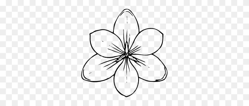 Crocus Flower Top View Clip Art - Flower Line Clipart