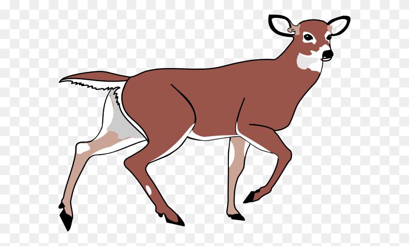 Cute Deer Line Art Free Clip Art Image - Mule Clipart