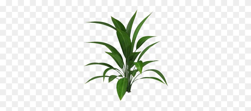Cutout Plant Cutout Plants, Tropical Plants - Plant Top View PNG