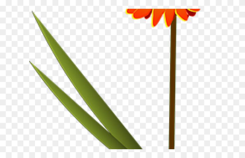 Daisy Clipart Orange Daisy - Daisy Clipart