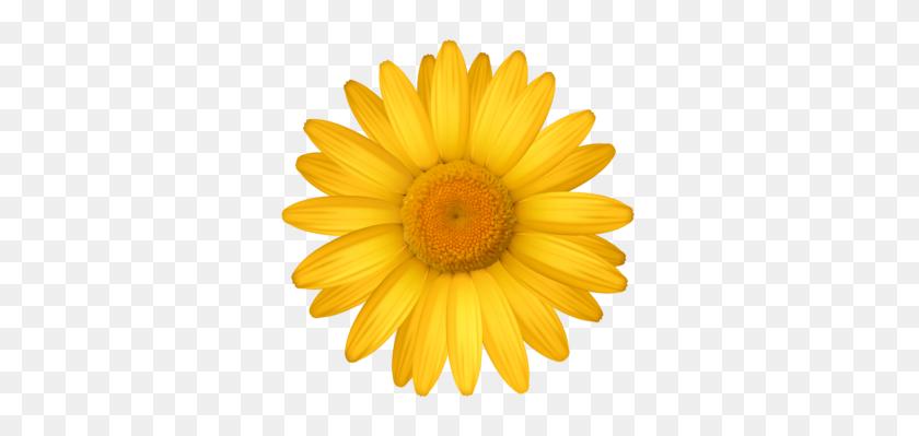 Daisy Clipart Yellow Daisy - Daisy Border Clipart