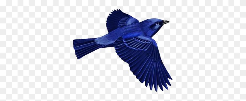 Dark Blue Bird Clip Art Birds Birds, Blue Bird And Art - Blue Jay Clipart