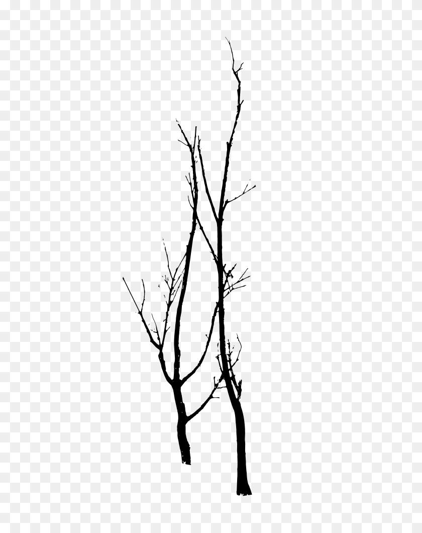 757x1000 Dead Trees Vector - Free Eucalyptus Clipart