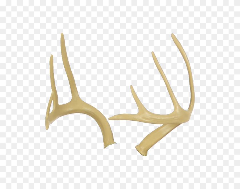 Deer Antlers - Deer Antlers PNG