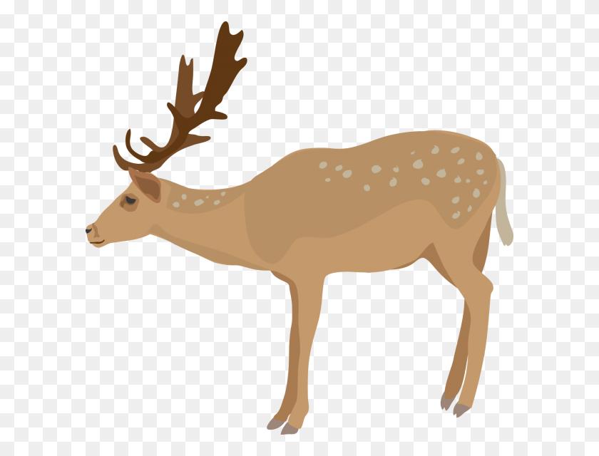 Deer Clip Art - Whitetail Deer Clipart