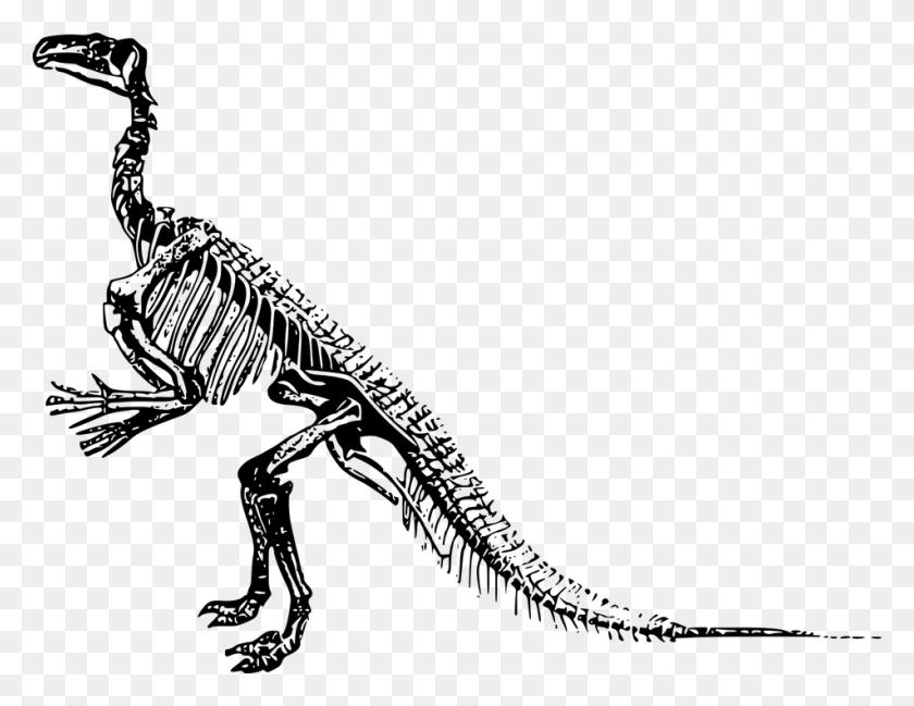 Dinosaur Bones Png Hd Transparent Dinosaur Bones Hd Images - Bones PNG