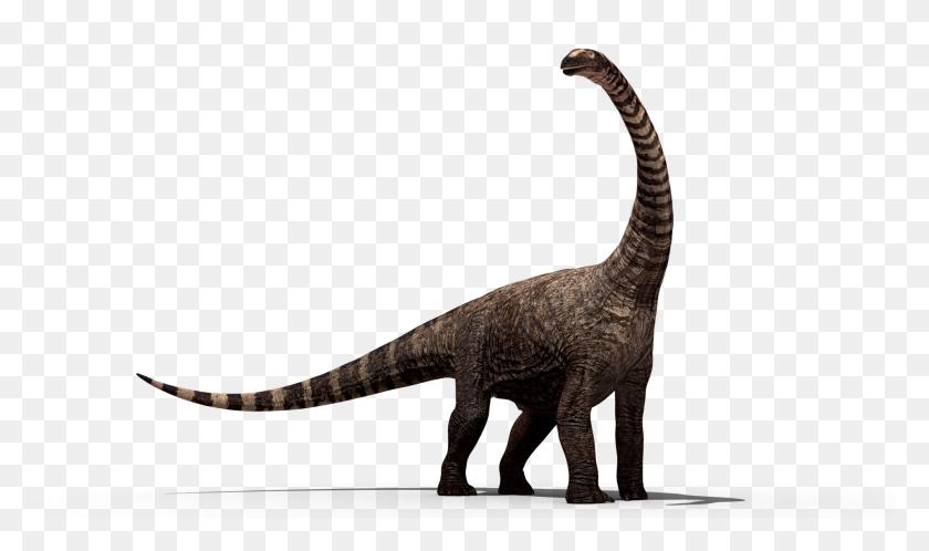 Dinosaur Bones Png Hd Transparent Dinosaur Bones Hd Images - Dinosaur Bones PNG