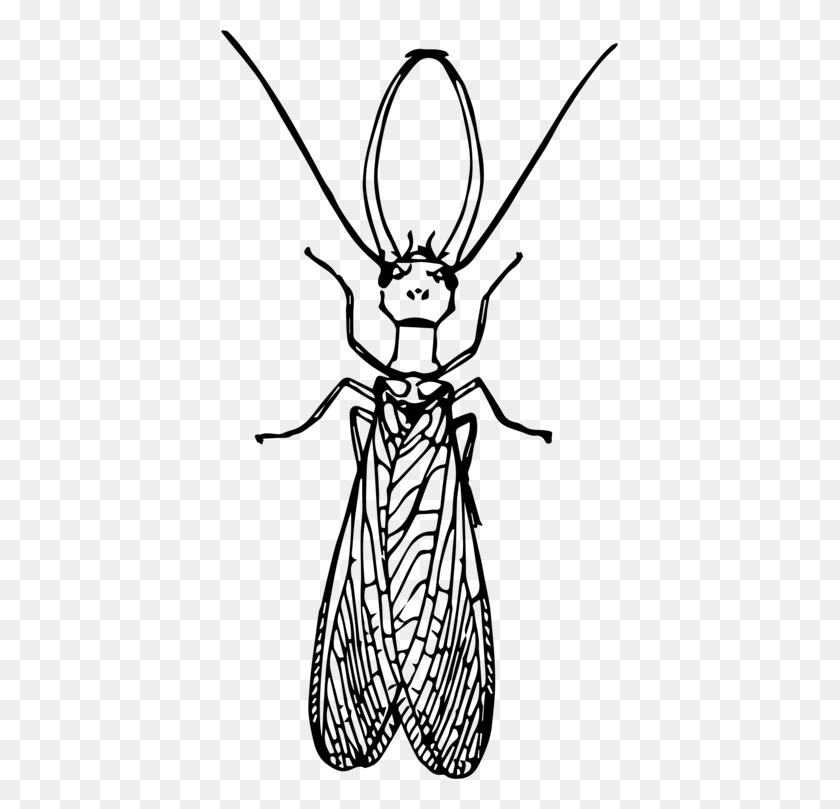 Dobsonflies Insect Drawing Fly Computer Icons - Mosquito Clipart Black And White