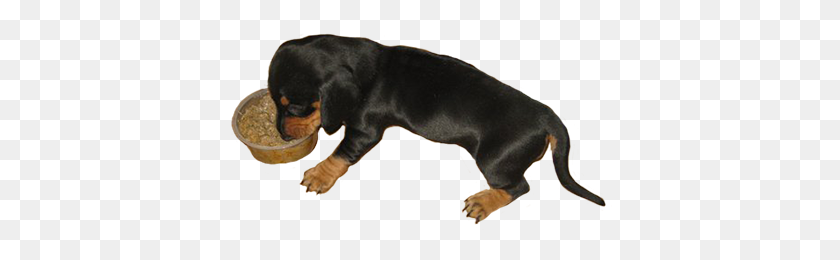 384x200 Dog Clip Art - Funny Dog PNG