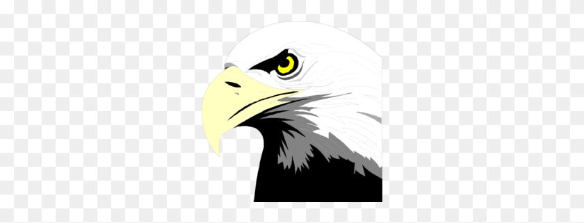 Download Bald Eagle Head Clip Art Clipart Bald Eagle Clip Art - Mockingbird Clipart