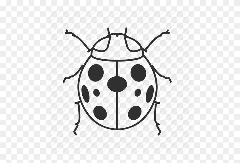 Download Beetle Clipart Ladybird Beetle Clip Art Ladybird - Beetle Clipart Black And White