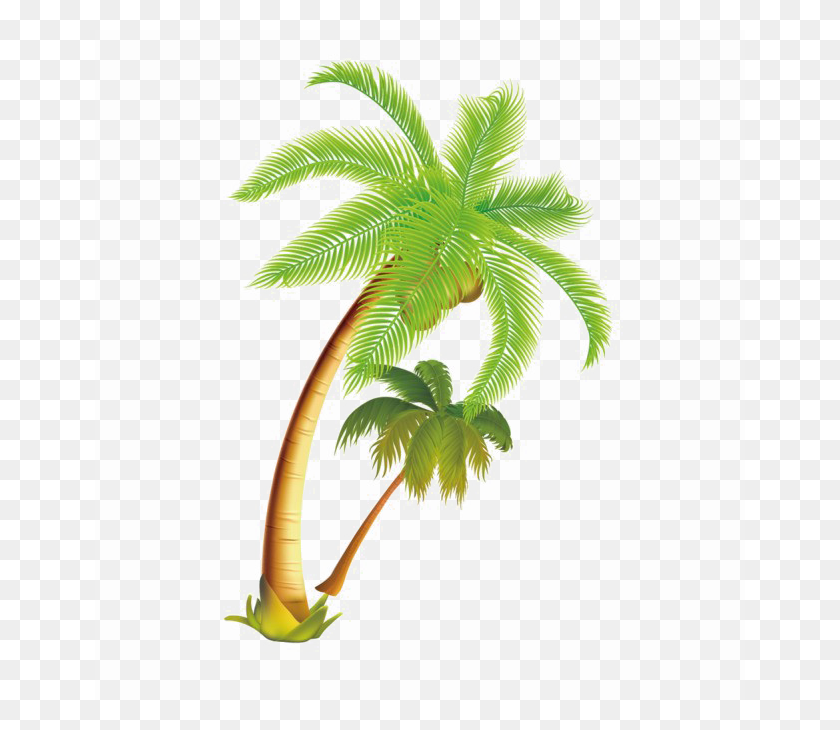 Download Coconut Tree Vector Png Clipart Palm Trees Coconut Clip - Palm Tree With Coconuts Clipart