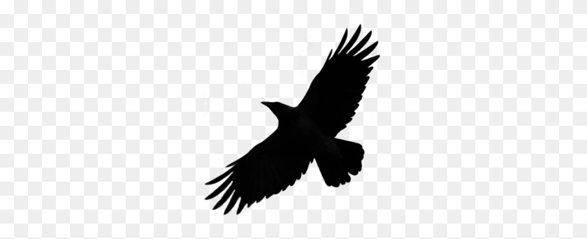 Download Crow Silhouette Png Clipart Bird Crow Common Raven Bird - Birds Silhouette PNG