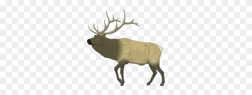 Download Elk Clip Art Free Clipart Elk Clip Art Deer Clipart - Whitetail Deer Clipart