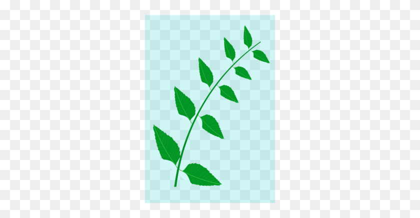 Download Neem Tree Leaves Clip Art Clipart Neem Tree Clip Art - Mint Leaf Clip Art