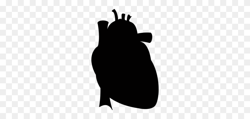 Drawing Anatomy Heart Diagram Organ - Anatomical Heart Clipart