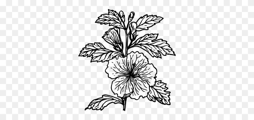 Drawing Flowering Plant Plants Line Art - Cotton Plant Clipart
