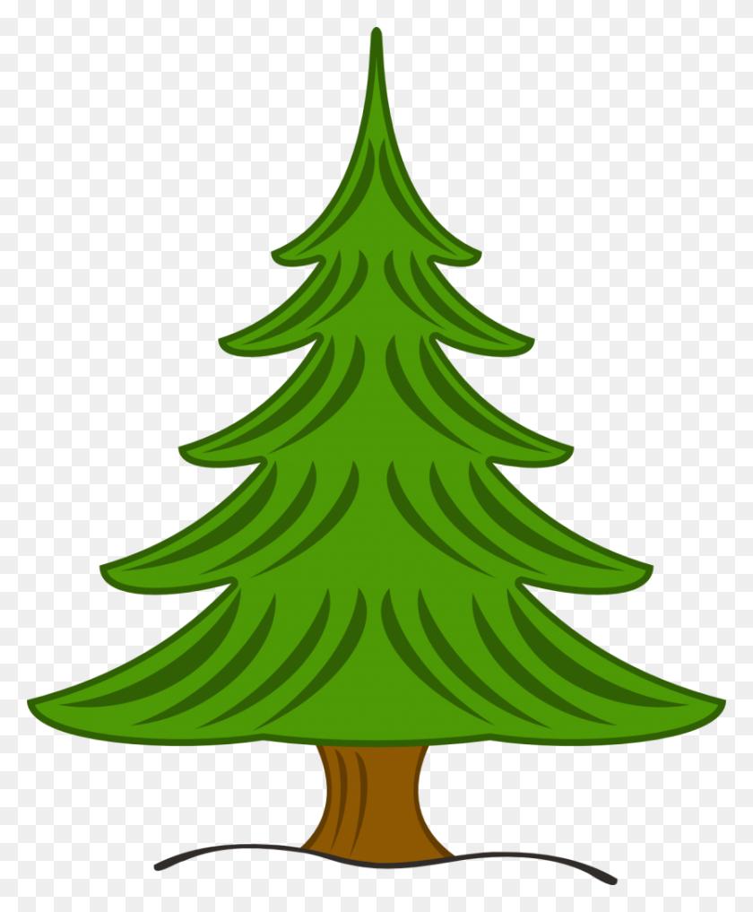 Drawn Pine Tree Drawing - Tree Drawing PNG