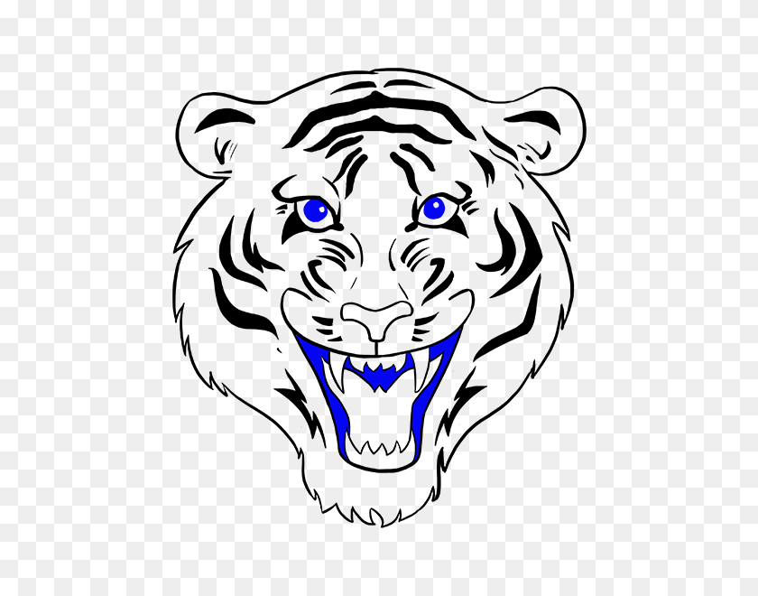 678x600 Drawn White Tiger Mouth Open Drawing - Saber Tooth Tiger Clipart