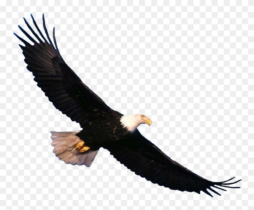 Eagle Scout Eagle, Bald Eagle - Free Eagle Clipart