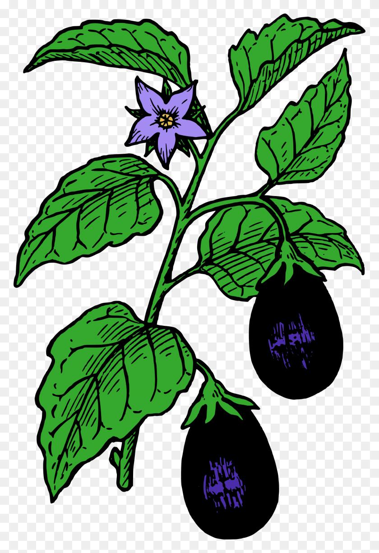 Eggplant Clipart Cartoon - Garden Clipart Black And White