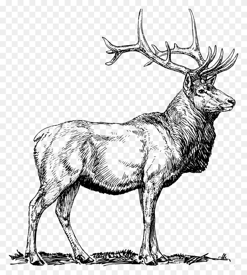 Elk Black And White Clipart Clip Art Images - Elk Clipart Black And White