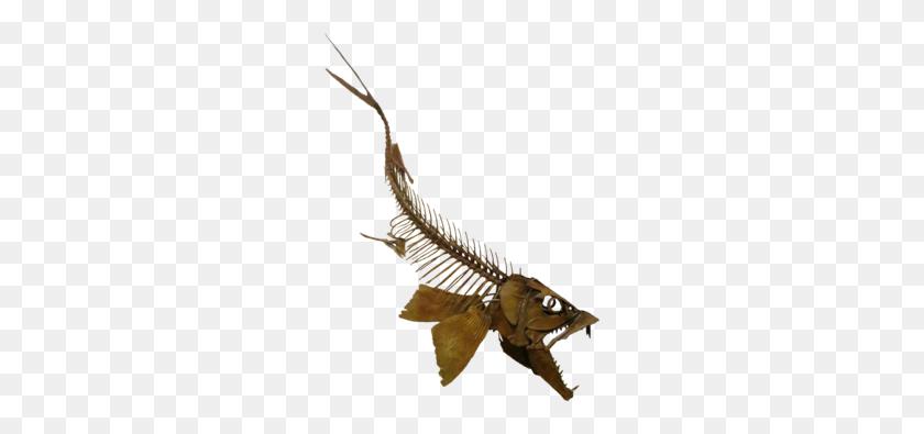 Enchodus - Dinosaur Bones PNG