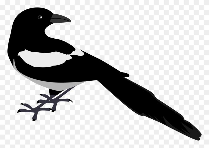Eurasian Magpie Crow Bird Computer Icons - Crow Clipart