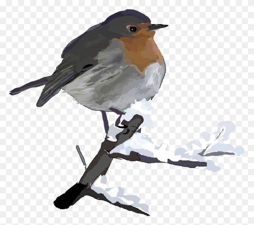 European Robin American Robin Clip Art Christmas - Robin Clipart