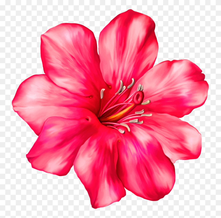 1414x1393 Exotic Pink Flower Png Clipart - Pink Flowers PNG