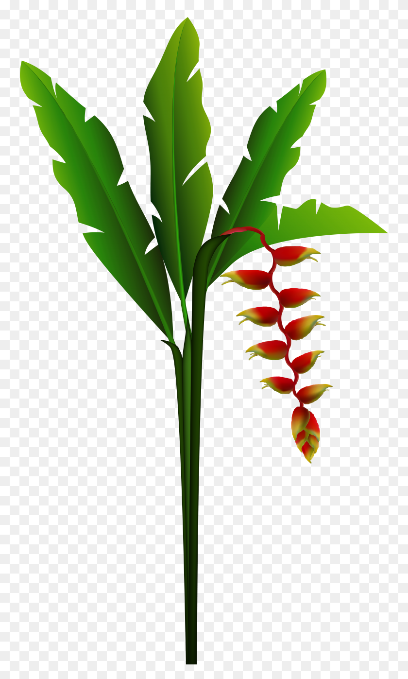 Exotic Red Tropical Flower Png Clip Art Gallery - Tropical Border Clipart