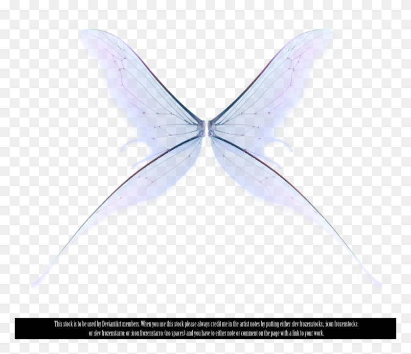 Fairy Wings Fairy - Fairy Wings PNG