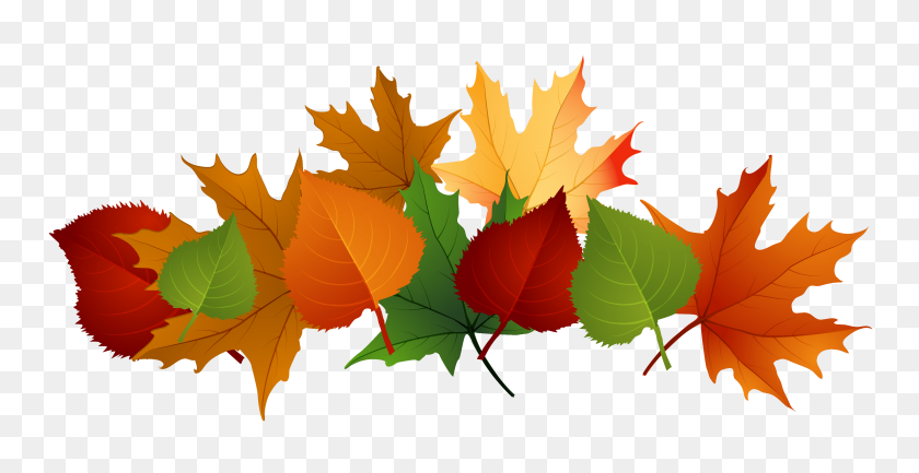 4153x1988 Fall Leaves Clip Art - Maple Leaf Clipart