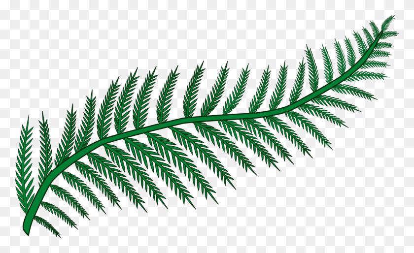 Fern Frond Plants Leaf Vascular Plant - Palm Frond Clip Art