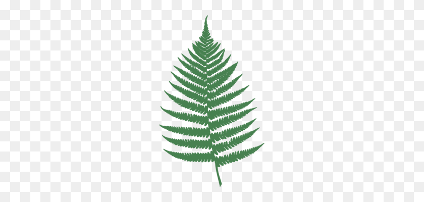 Fir Pine Tree Spruce Geometry - Palm Frond Clip Art