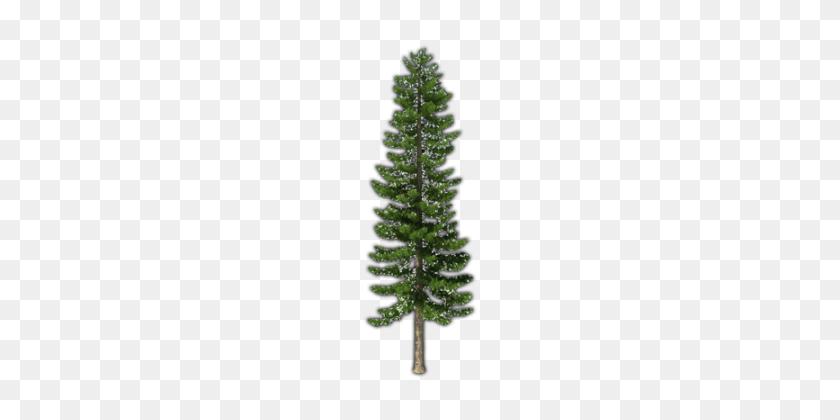 Fir Tree Png Pic - Fir Tree PNG