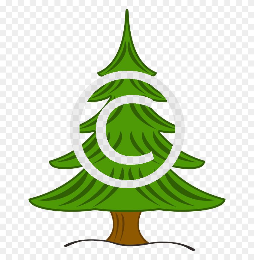 Fir Tree Tigerstock - Fir Tree PNG