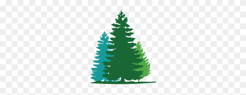 Fir Tree Wall Decals In Campout Nursery Tree - Pine Tree Silhouette PNG