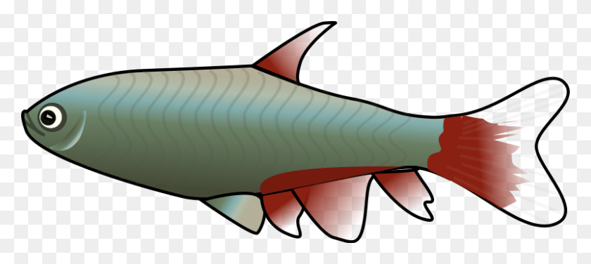 800x325 Fish Clipart Small Fish - Lure Clipart
