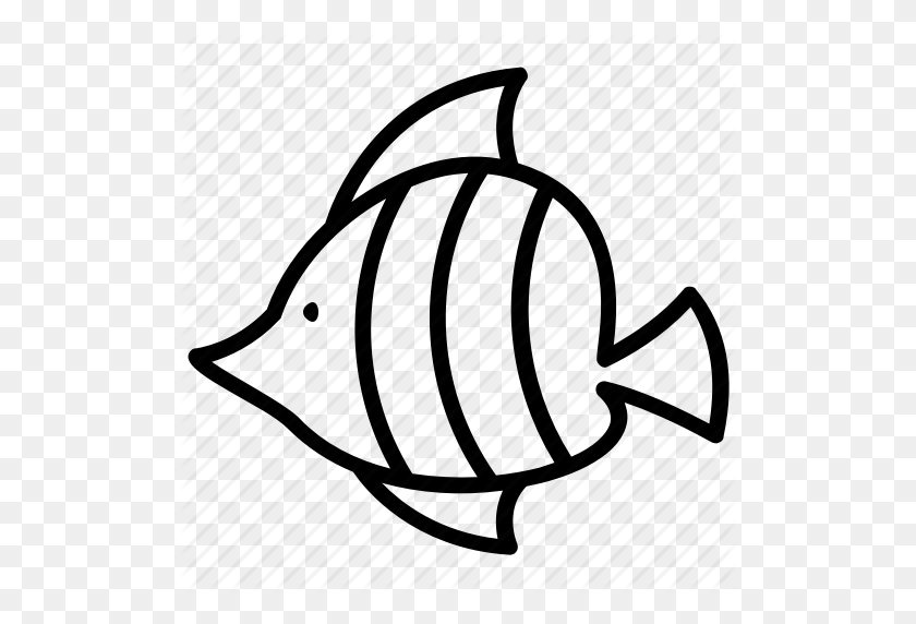Fish, Flat Body Fish, Reef Fish, Teardrop Fish, Tropical Animal Icon - Teardrop PNG