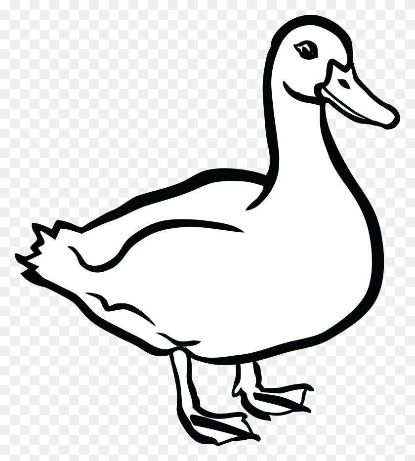Flamingo Clip Art - Free Duck Clipart