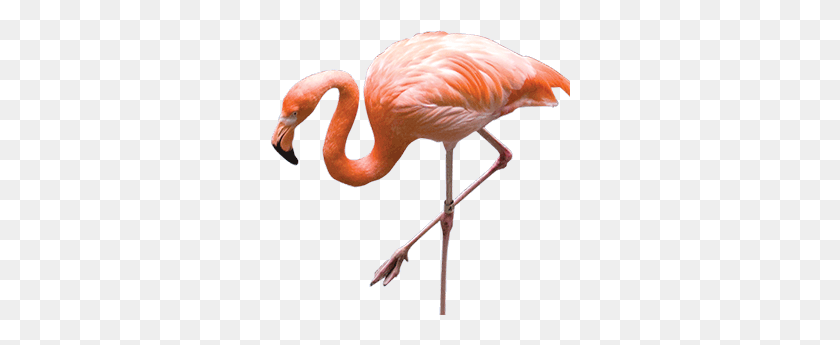 Free Flamingo Clipart, Download Free Clip Art, Free Clip Art on Clipart  Library