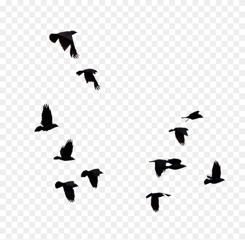 Flock Of Birds Silhouette Png - Birds Silhouette PNG