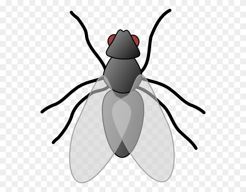 Fly Bug Insect Clip Art - Mosquito Clipart Black And White