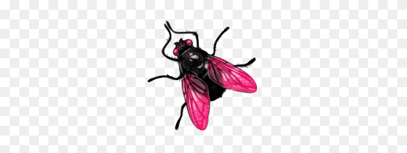 Fly Png Image, Free Download Fly Png Pictures - Fly PNG