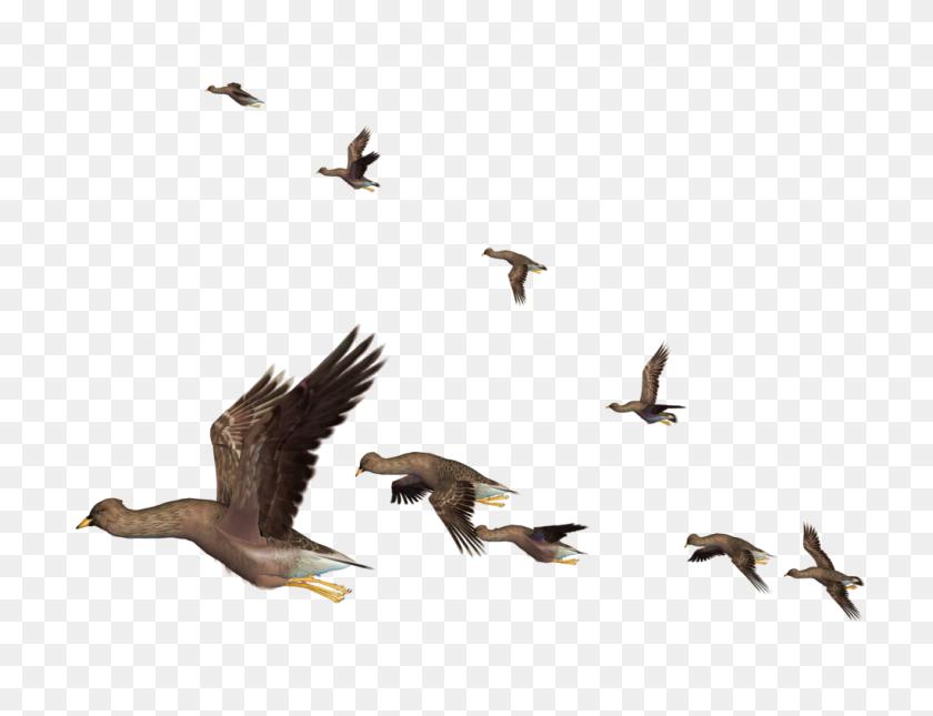 Flying Bird Png - Flock Of Birds PNG